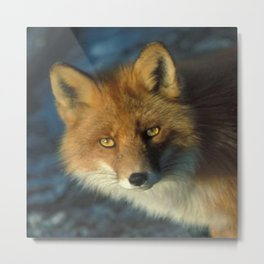 Red Fox in the Wild Metal Print