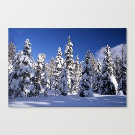 Snow covered trees in the forest. Winter day with blue sky. Canvas Print
