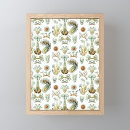Ernst Haeckel - Scientific Illustration - Bryozoa Framed Mini Art Print