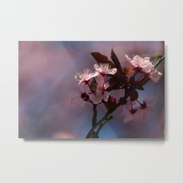 Very Cherry Blossom Metal Print