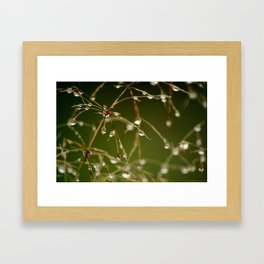 Branches of Dew Framed Art Print