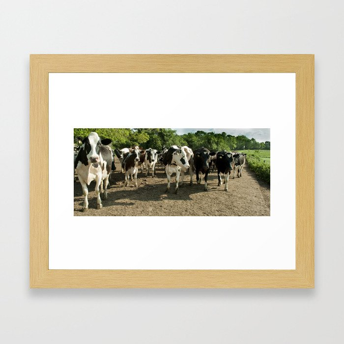 Cow panoramic Framed Art Print