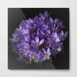 the colors of spring - lilac crocus Metal Print