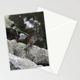 Sparrow on a rock Stationery Cards