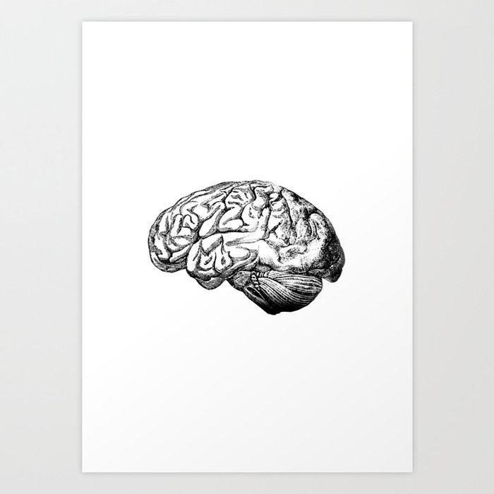 Brain Anatomy Kunstdrucke