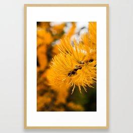 Golden Needles Framed Art Print