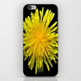 A Dandy Dandelion iPhone Skin