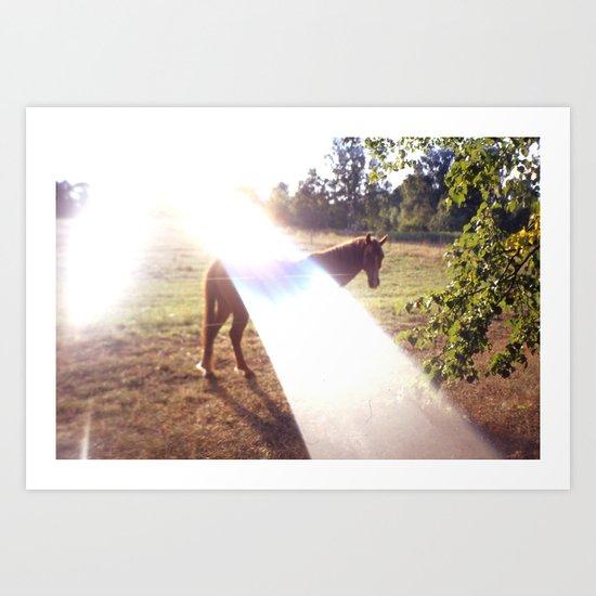 summer horse Art Print