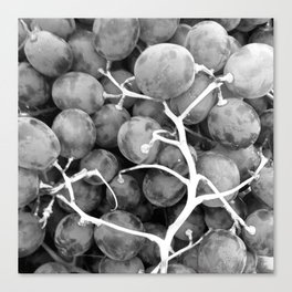 Grapes Fruit black and white Canvas Print