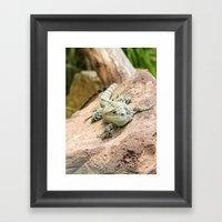 Lizard's Rest Framed Art Print