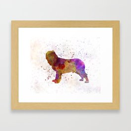 Napolitan Mastiff in watercolor Framed Art Print