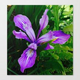 Wild Purple Iris Canvas Print
