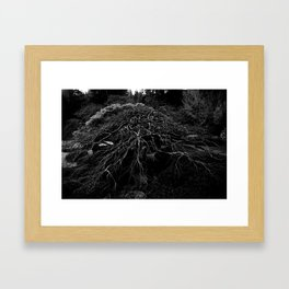 WINTER MAPLE Framed Art Print