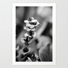 cordifolia Art Print