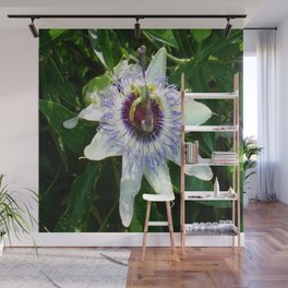 Beautiful Passion Flower With Garden Background  Wall Mural