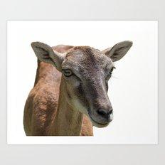 deer on white background Art Print