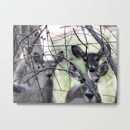 Deer, Washington Grove Metal Print