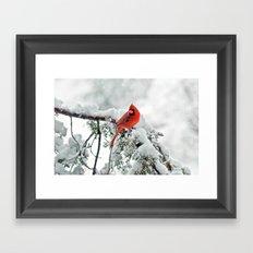 Cardinal on Snowy Branch #2 Framed Art Print