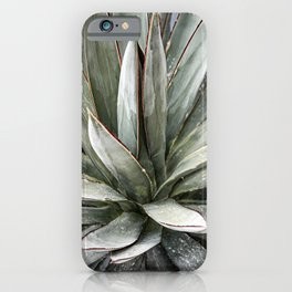 Succulents // Light Green Blue Cactus Plant Leaves Close Up Horizontal iPhone Case