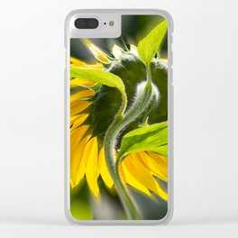 The sunflower from behind Clear iPhone Case