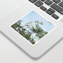 Cattle Egret In a Tree Sticker