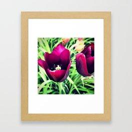 Purple Tulips in Bloom Framed Art Print