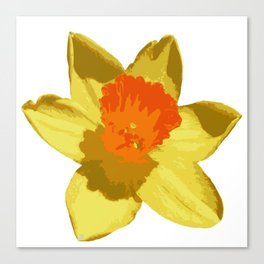 Spring Daffodil Vector Isolated Canvas Print