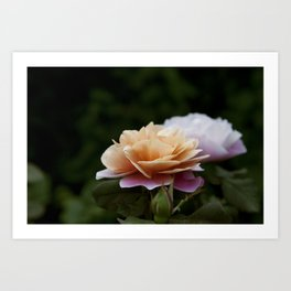 Lily Pad Rose Art Print