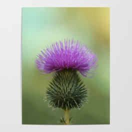 Bright Purple and Green Thistle Poster