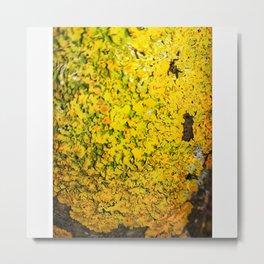 Baumrinde mit Pflanze 2 Metal Print
