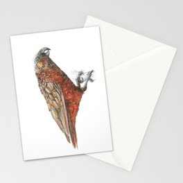 New Zealand parrot, the Kaka Stationery Cards