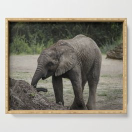 Baby African Elephant 1 Serving Tray