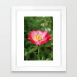 Shakespeare Garden 1. Poppy Framed Art Print