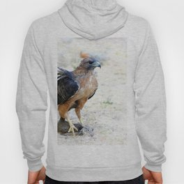 Hungry Red Teiled Hawk Hoody