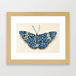 Firecracker Butterfly Framed Art Print