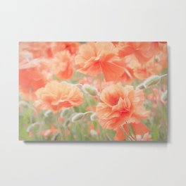 Enchanting Poppies Metal Print