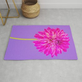 Close-up image of the flower dahlia on purple background. Shallow depth of field. Rug