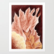 Platycerium Art Print