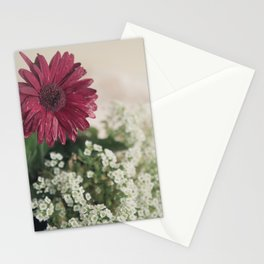 Soft Focus Red Daisy Stationery Cards