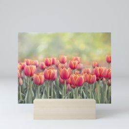 Tulip flowers meadow, selective focus. Spring nature background Mini Art Print