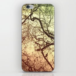 Branches With Reflections iPhone Skin