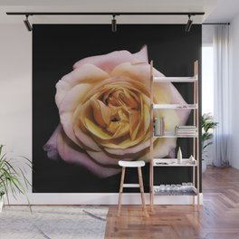 Rose flower photo pink orange color Wall Mural
