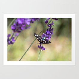 Amata Phagea on lavender Art Print