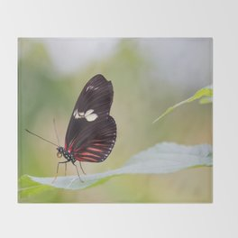 Postman butterfly Throw Blanket