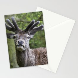 Staring Contest Stationery Cards