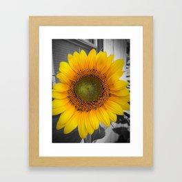 Kentucky sunflowers Framed Art Print