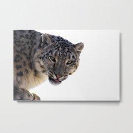 Léopard des neiges Metal Print