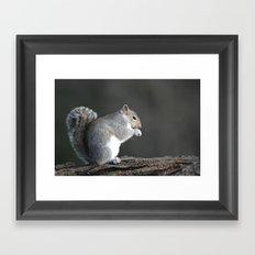 Grey Squirrel Framed Art Print