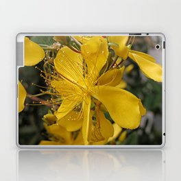Hypericum flower closeup Laptop & iPad Skin