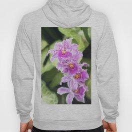 Longwood Gardens Orchid Extravaganza 61 Hoody